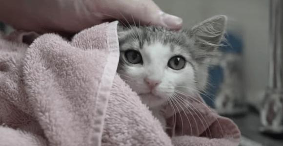 Vídeo sobre a adoção de um gatinho é uma explosão de fofura
