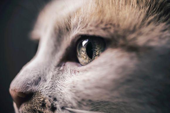 Fotografias de gatos 2