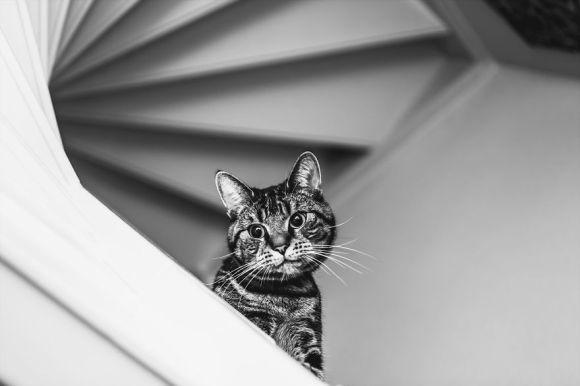 Fotografias de gatos 3