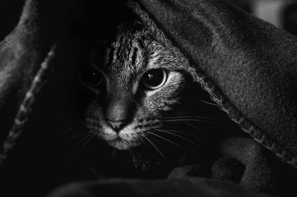 Fotografias de gatos 4