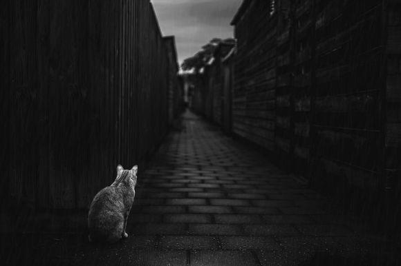Fotografias de gatos 5
