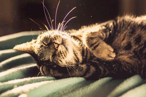 Fotografias de gatos 7