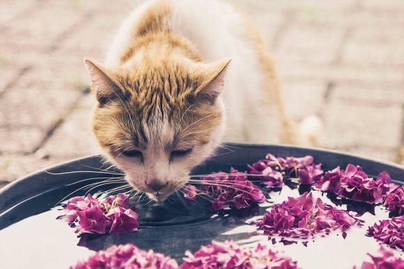 Fotografias de gatos 8