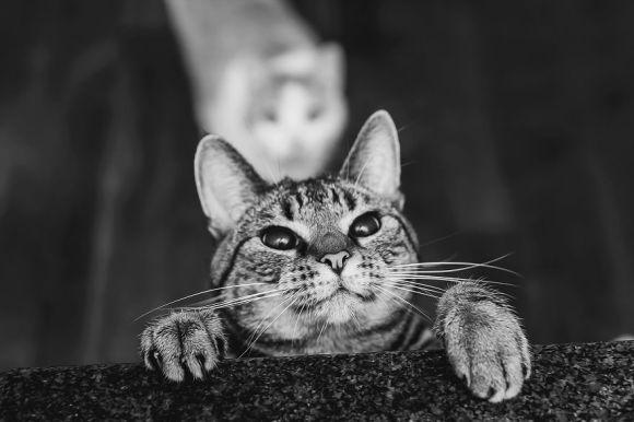 Fotografias de gatos