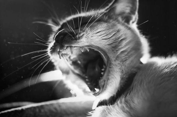 Fotografias de gatos6