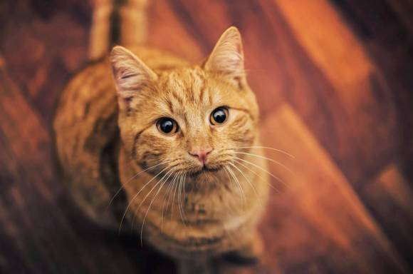 Fotos de gatos 11