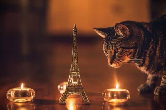 Fotos de gatos 13
