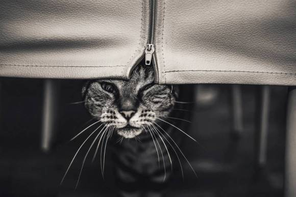 Fotos de gatos 14