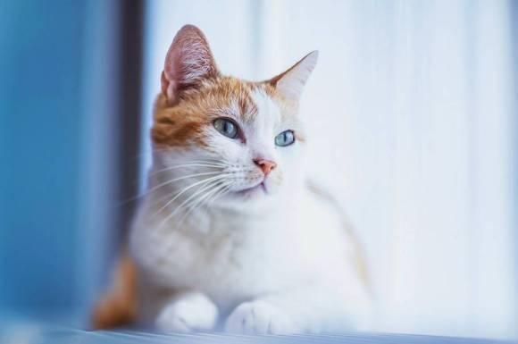 Fotos de gatos 3
