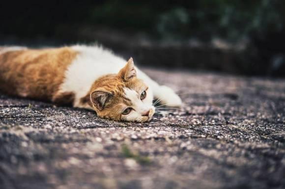 Fotos de gatos 4