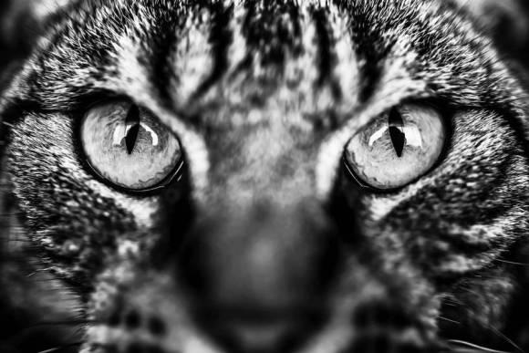 Fotos de gatos 5
