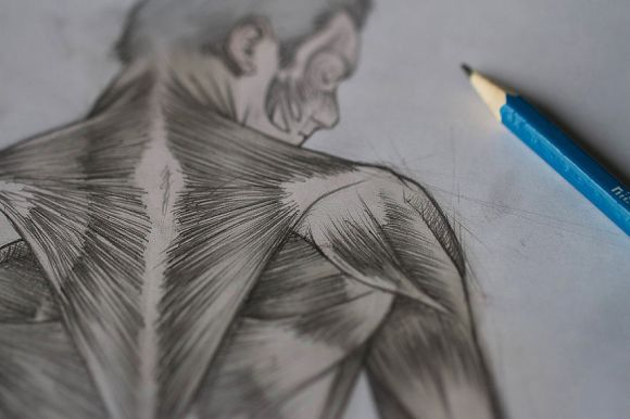 i-study-human-muscles-by-drawing-them-on-my-selfies-4__880[1]