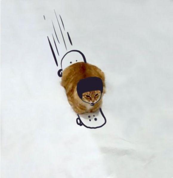 Desenhos sobre a foto de um gato 2 - Giuntergrass Peciukonis