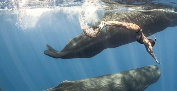 Eles realizaram mergulho livre junto com os maiores mamíferos do Planeta