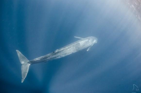 Mergulhando com baleias 5