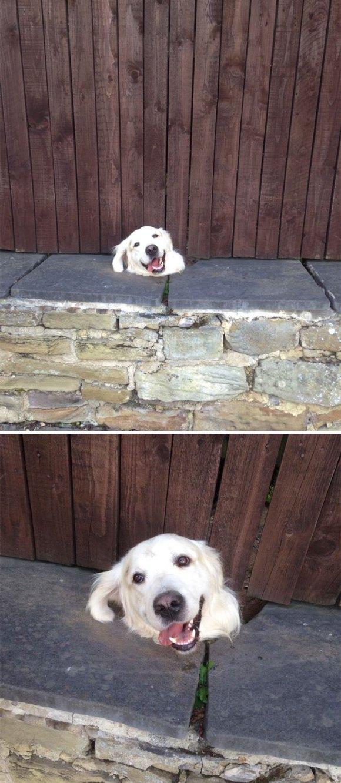 Cachorros que gostam de olhar a rua 2