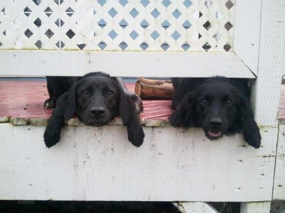Cachorros que gostam de olhar a rua 3