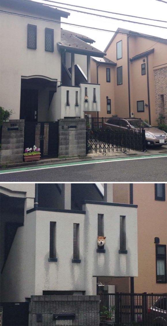 Cachorros que gostam de olhar a rua 5