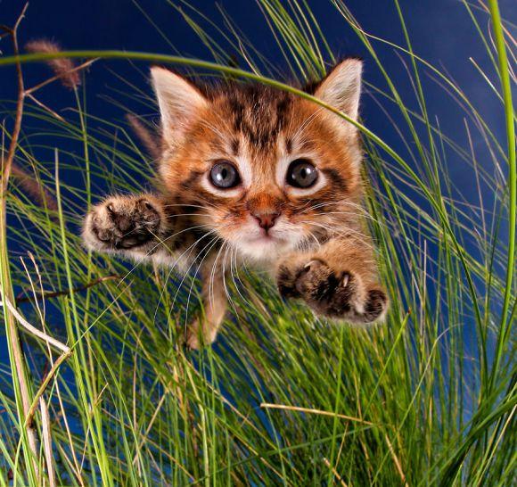 filhotes-de-gato-2