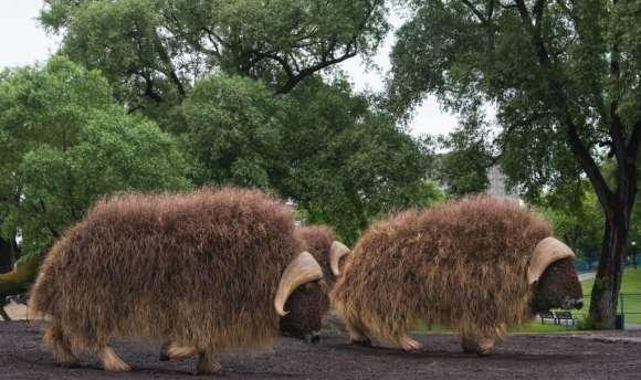 Dois Búfalos