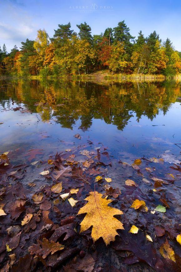 Folhas secas em primeiro plano e árvores de outono ao fundo