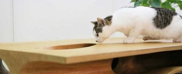 Seu gato vai adorar passear por essa mesa enquanto você trabalha
