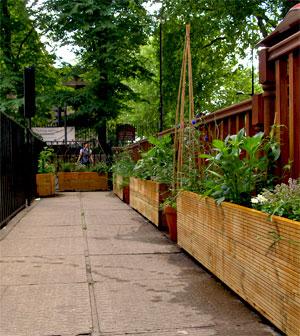 Somerton House Garden
