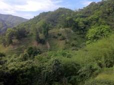 pinglin_hills