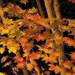 姫路城「好古園」の紅葉ライトアップは穴場でおすすめ!