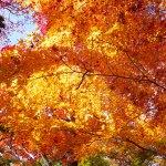 有馬温泉の瑞宝寺公園に見頃の紅葉を日帰りで見に行って来ました!