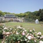 神戸市の須磨離宮公園にあるバラ園へ行って来ました!
