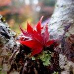 瑞宝寺公園へ見頃の紅葉と有馬グランドホテルのランチに行って来たよ!