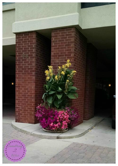 Drury Inn Outdoor Plant