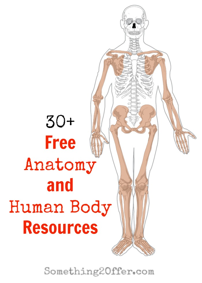 Anatomy and Human Body Resources