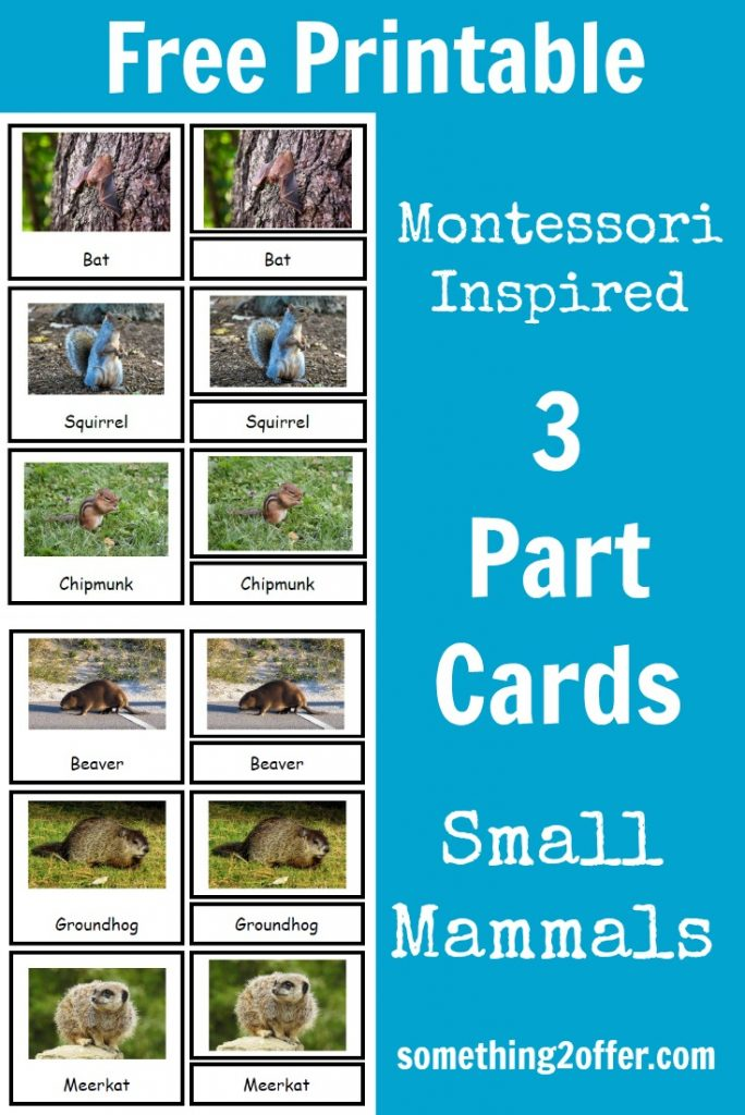 Small Mammals 3 part cards free printable
