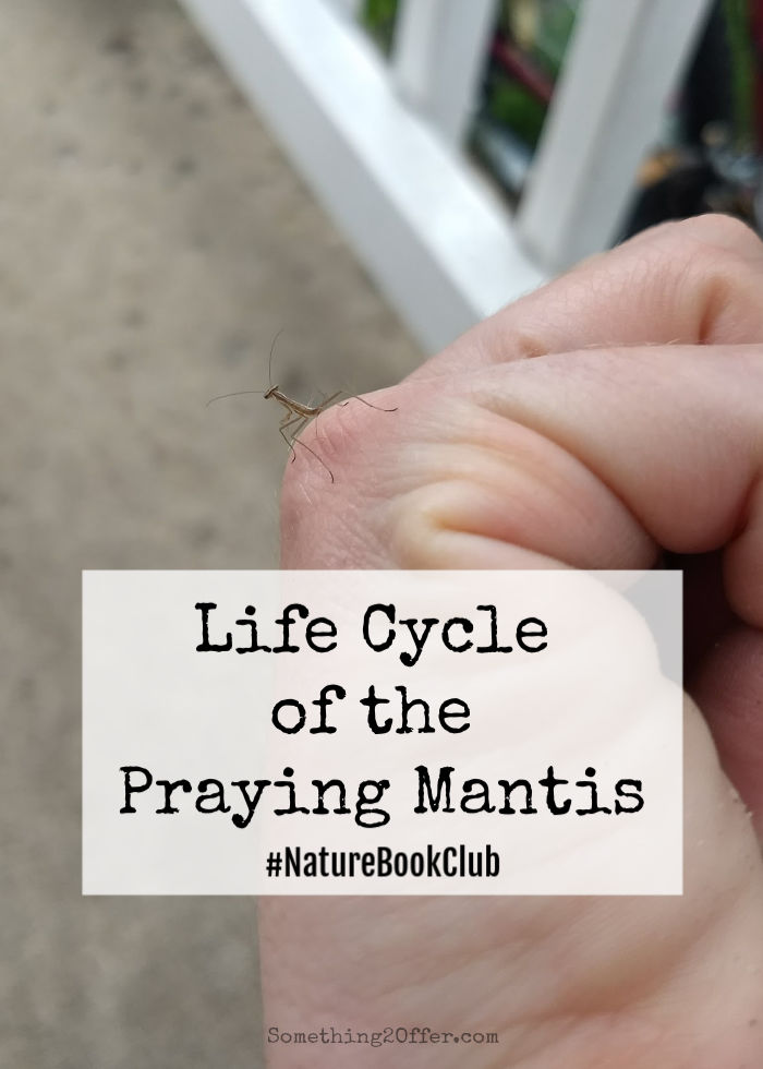 Praying Mantis Life Cycles