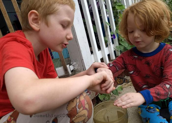 boys releasing Monarch