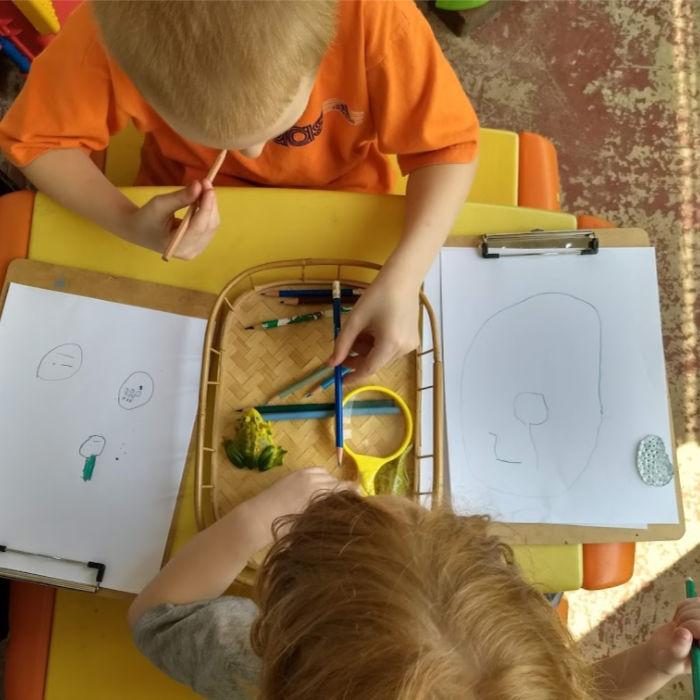 Frog life cycle drawing both boys