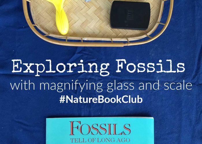 Exploring Fossils #NatureBookClub #naturestudy #fossils
