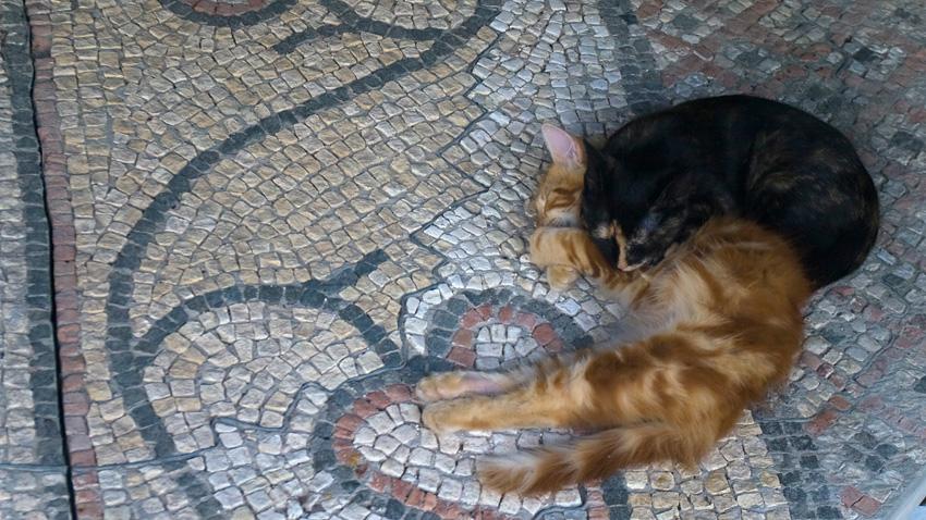 Мозаичные полы Херсонеса