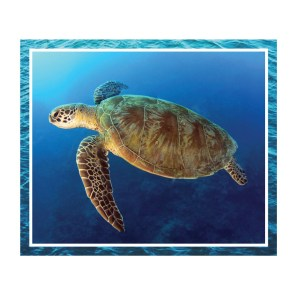 Patchwork Quilting Sewing Fabric GREAT BARRIER REEF TURTLE 1 Panel 90x110cm New