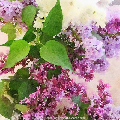 Flieder - Lilac - Something to Cherish