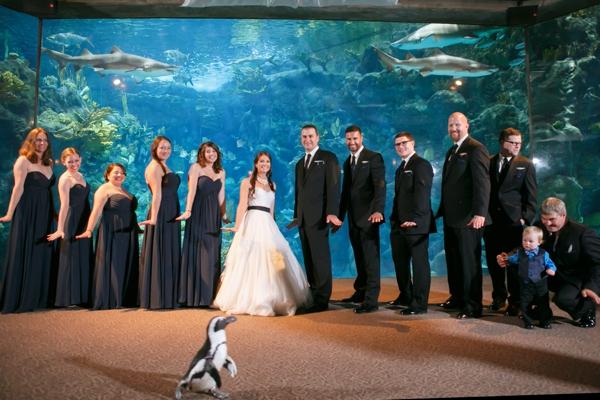 SomethingTurquoise_DIY_aquarium_wedding_Carrie_Wildes_Photography_0021.jpg