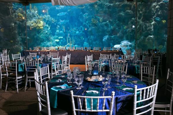 SomethingTurquoise_DIY_aquarium_wedding_Carrie_Wildes_Photography_0025.jpg