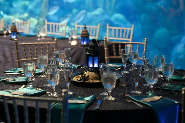 SomethingTurquoise_DIY_aquarium_wedding_Carrie_Wildes_Photography_0029.jpg
