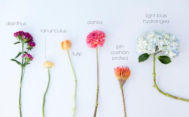 Wedding bouquet ingredients