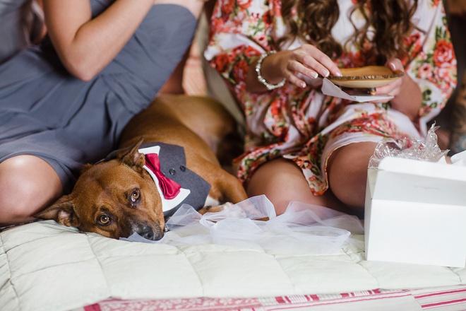 Sweet Dog In Tux at Wedding!