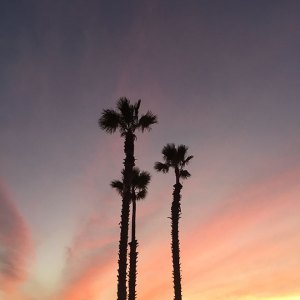 Gorgeous palm trees and sunset