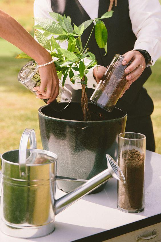 Unity tree planting ceremony at a wedding.