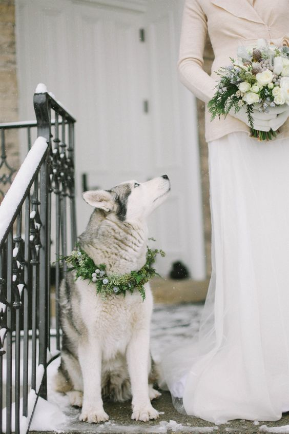 I want to involve my dog in my wedding! So sweet.